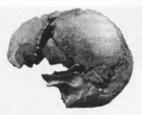 To The Pliocene Skull