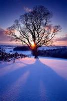 Snow Dusk