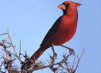 A Bird From The West