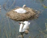 The Romance Of The Swan's Nest