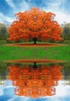 Reflections On A Tree In Autumn