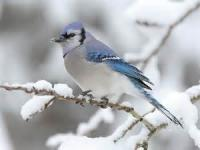 To A Bird Singing In Winter