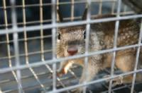 To A Squirrel In A Cage