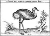 The Etymology Of The Name 'emu'