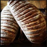 Bread - Sourdough -  Sourdough Starter By Pepe