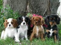 The Early Days Of A Famous Cavalier