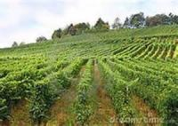 Go Work In My Vineyard
