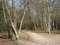 In The Shadow Of The Beeches