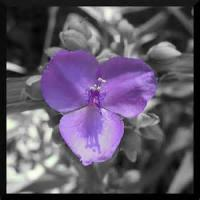 Three Flower Petals