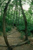 Tree-burial
