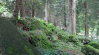 Yon Wild Mossy Mountains