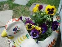 My Pansy Pets