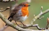 A September Robin