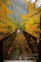 Autumn At The Bridge