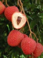 Fruit - Chicken Lychee
