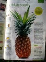 Fruit - Pineapple -  Pineapple Pound Cake