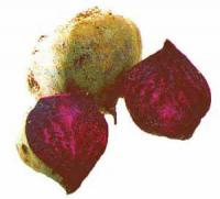 Vegetables - Chinese Beets