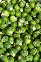 Vegetables - Belgian Sprouts