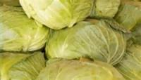 Vegetables - Cabbage -  Kiseli Kupus