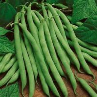 Vegetables - Green Beans -  Busy Beans