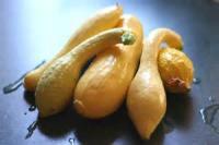 Vegetables - Italian Squash