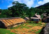 Poultry - Chicken -  Vanuatu Laplap