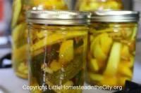 Preserving - Elephant Garlic Jelly