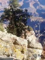 Roping Lions In The Grand Canyon - Chapter 14
