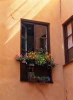 Open Doors And Windows, Books And Flowers
