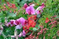 Proserpina: Studies Of Wayside Flowers, Volume 2 - Chapter 1. Viola